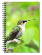 Spring Beauty Ruby Throat Hummingbird Spiral Notebook