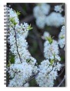 Spring Blossoms 2 Spiral Notebook
