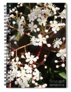 Spring Blossoms Macro Spiral Notebook