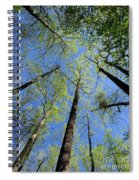 Spring Canopy Skylight Spiral Notebook