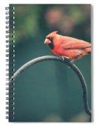 Spring Cardinal Spiral Notebook