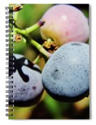 Spring - Colors - Blueberries Spiral Notebook