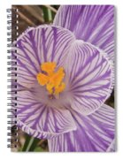 Spring Crocus Spiral Notebook