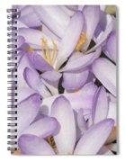 Spring Crocuses Spiral Notebook