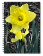 Spring Daffodil Spiral Notebook