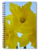 Spring Daffodils 2 Flowers Art Prints Gifts Blue Sky Spiral Notebook