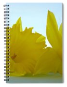 Spring Daffodils Flowers Art Prints Blue Skies Spiral Notebook