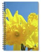 Spring Daffodils Flowers Garden Blue Sky Baslee Troutman Spiral Notebook