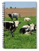 Spring Day With Cows On An Amish Cattle Farm Spiral Notebook