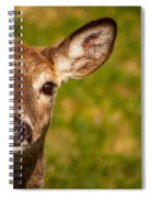 Spring Deer Spiral Notebook
