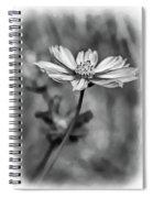 Spring Desires 2 Bw Spiral Notebook