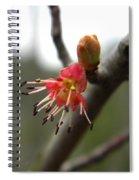 Spring Flower Closeup 1 Spiral Notebook