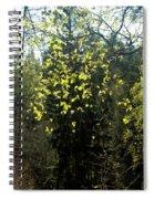 Spring Foliage Spiral Notebook