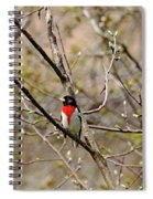 Spring Grosbeak Spiral Notebook