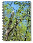 Spring In The Deep Woods Spiral Notebook