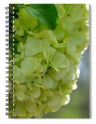 Spring Is In The Air -vines Botanical Garden Spiral Notebook
