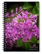 Spring Lilacs On Black Spiral Notebook