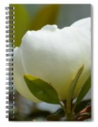 Spring Magnolia Spiral Notebook