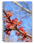 Spring Maple Blossoms Spiral Notebook