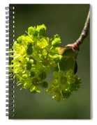 Spring Maple Spiral Notebook