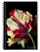 Spring Parrot Tulip Spiral Notebook