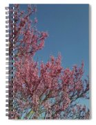 Spring Redbud Tree Spiral Notebook