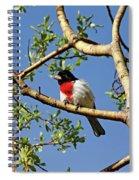 Spring Rose Breasted Grosbeak Spiral Notebook