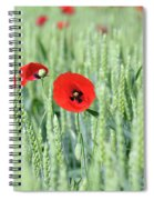 Spring Scene Green Wheat And Poppy Flowers Spiral Notebook