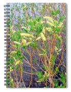 Spring Shoreline Spiral Notebook