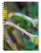 Spring Springing Spiral Notebook