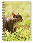 Spring Squirrel Spiral Notebook