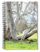 Spring Sycamore Tree Spiral Notebook