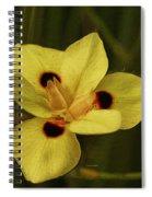 Spring Time In Florida Spiral Notebook