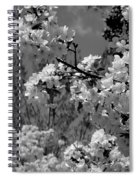 Spring Trees - B And W Spiral Notebook