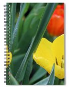 Spring Tulips 144 Spiral Notebook