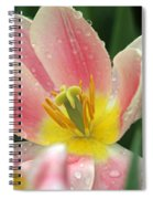 Spring Tulips 154 Spiral Notebook