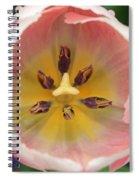 Spring Tulips 174 Spiral Notebook