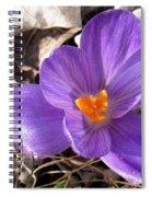 Spring Violet Spiral Notebook