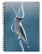 Spring Wax Wings  Spiral Notebook