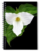 Spring's Beauty Spiral Notebook
