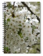 Springtime Abundance - Masses Of White Blossoms Spiral Notebook