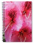 Springtime Azalea Spiral Notebook