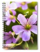 Springtime Blooms Violet Wood Sorrel 3 Spiral Notebook
