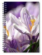 Springtime Color Spiral Notebook