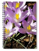 Springtime Crocuses  Spiral Notebook