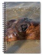 Springtime Driftwood Spiral Notebook