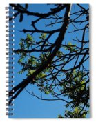 Springtime In The City Spiral Notebook