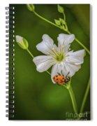 Springtime Ladybug Spiral Notebook
