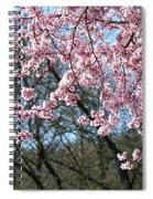Springtime Seasonal Pink Blossom Flowers Baslee Spiral Notebook