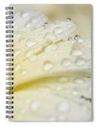 Sprinkled Spiral Notebook